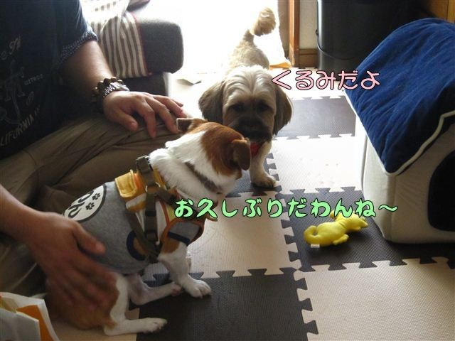 f:id:yasukazu01:20120816164056j:image
