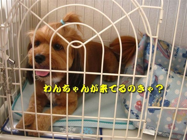 f:id:yasukazu01:20120816164102j:image
