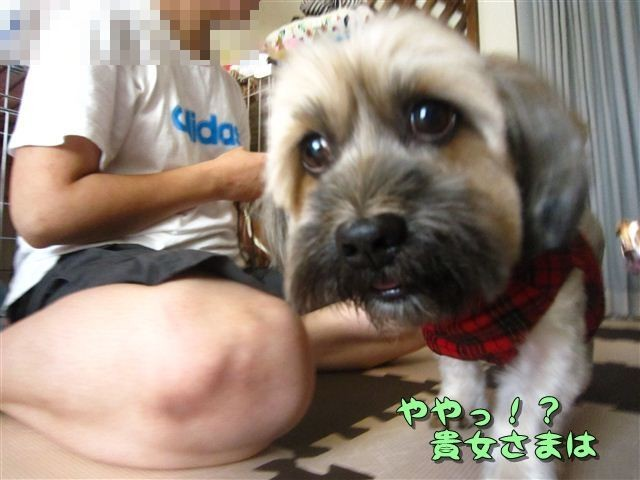 f:id:yasukazu01:20120816164604j:image