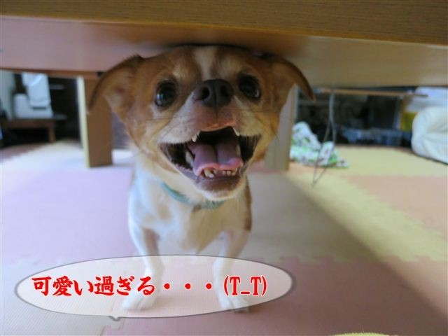 f:id:yasukazu01:20120816180549j:image