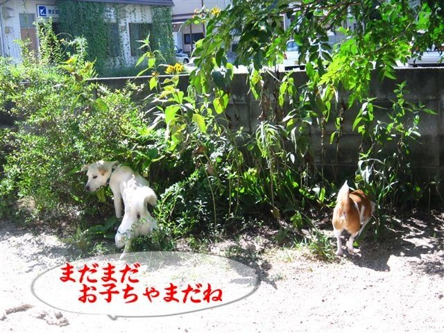 f:id:yasukazu01:20120819101932j:image