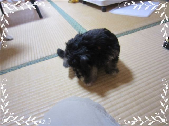 f:id:yasukazu01:20120824153325j:image