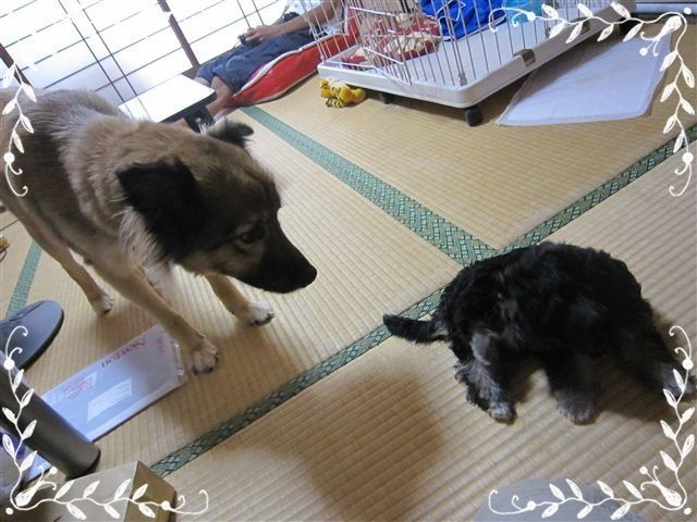 f:id:yasukazu01:20120824153330j:image