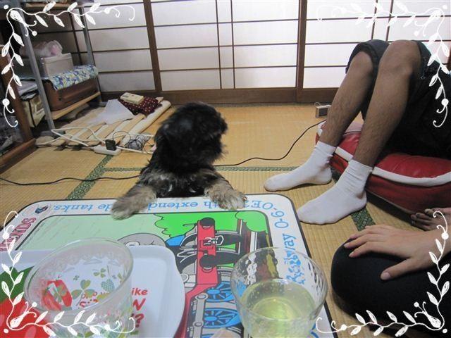 f:id:yasukazu01:20120824153502j:image