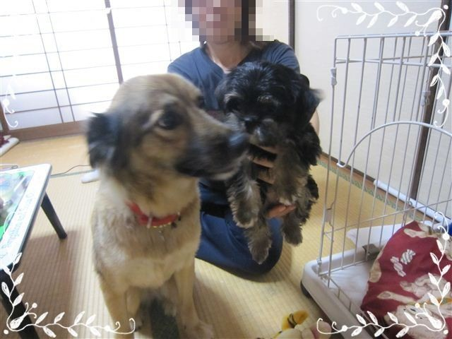 f:id:yasukazu01:20120824153623j:image