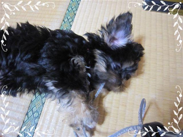 f:id:yasukazu01:20120824155047j:image