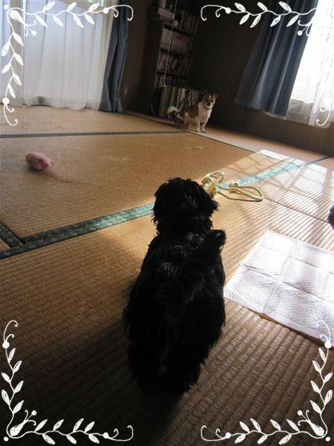 f:id:yasukazu01:20120824162033j:image