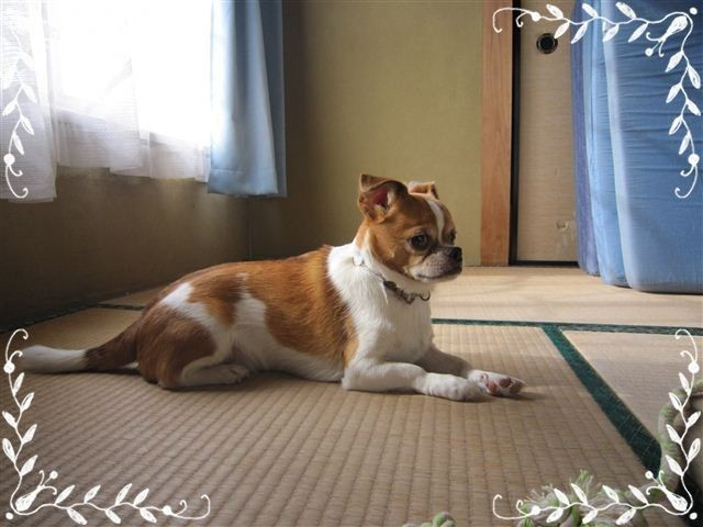 f:id:yasukazu01:20120824162329j:image