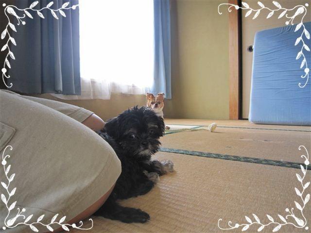 f:id:yasukazu01:20120824162400j:image