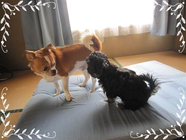 f:id:yasukazu01:20120824163037j:image