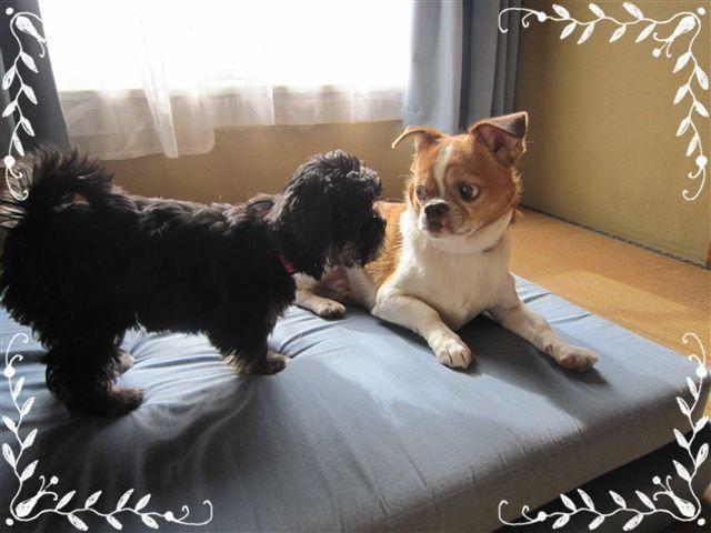 f:id:yasukazu01:20120824163112j:image