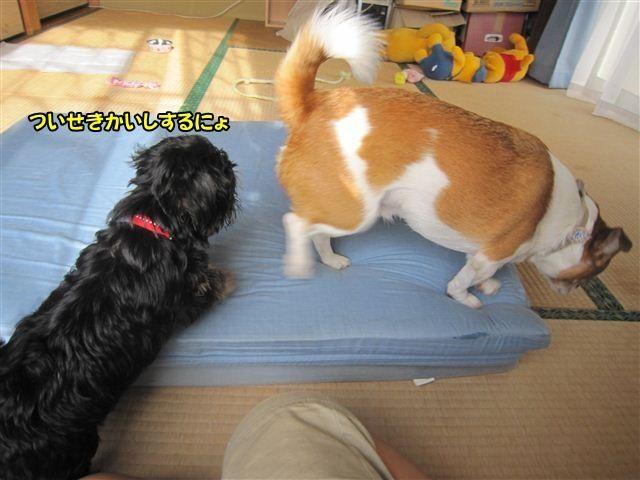 f:id:yasukazu01:20120824164149j:image