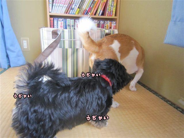 f:id:yasukazu01:20120824164154j:image