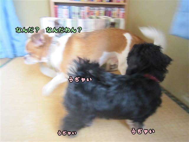 f:id:yasukazu01:20120824164202j:image