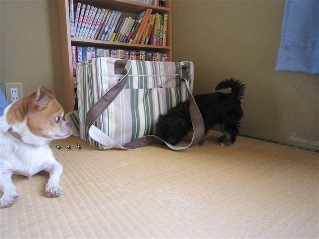 f:id:yasukazu01:20120824164355j:image