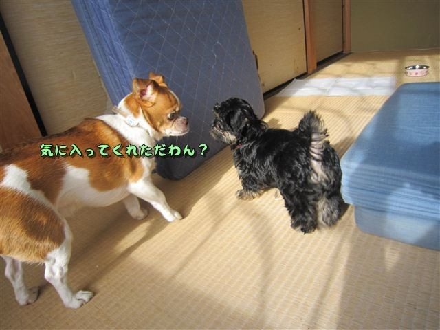 f:id:yasukazu01:20120824164529j:image