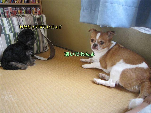 f:id:yasukazu01:20120824164605j:image
