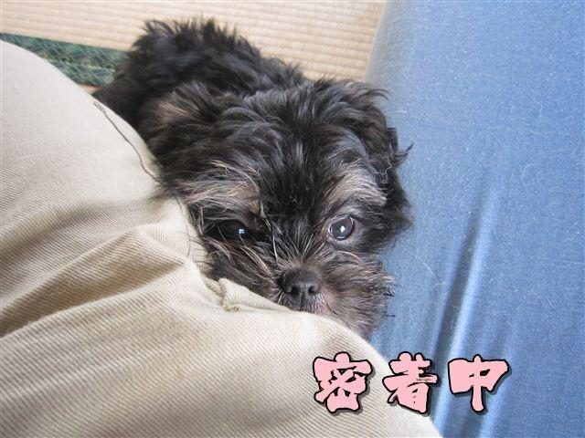 f:id:yasukazu01:20120824174703j:image