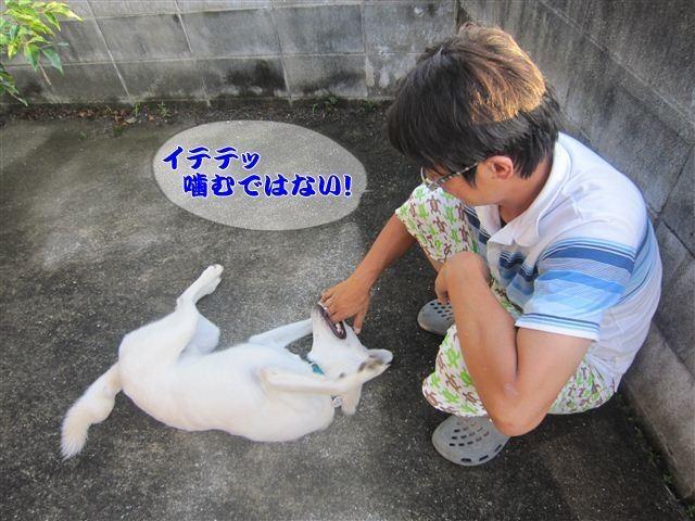 f:id:yasukazu01:20120825181030j:image