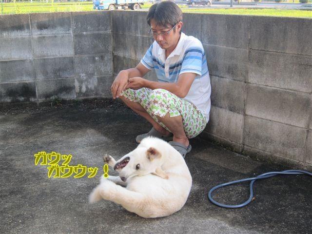 f:id:yasukazu01:20120825181424j:image
