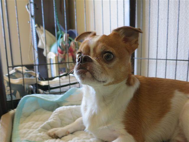f:id:yasukazu01:20120826082721j:image