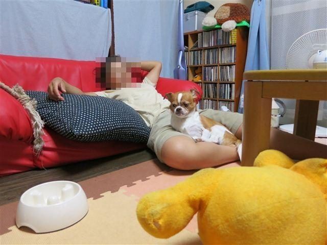 f:id:yasukazu01:20120906194316j:image
