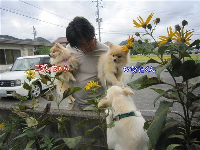 f:id:yasukazu01:20120908125820j:image