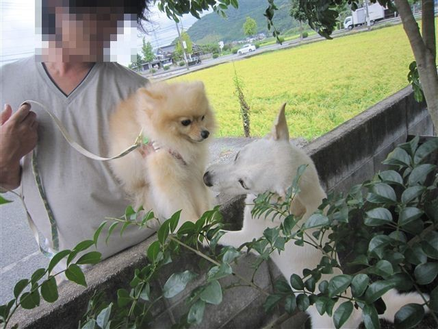 f:id:yasukazu01:20120908133818j:image