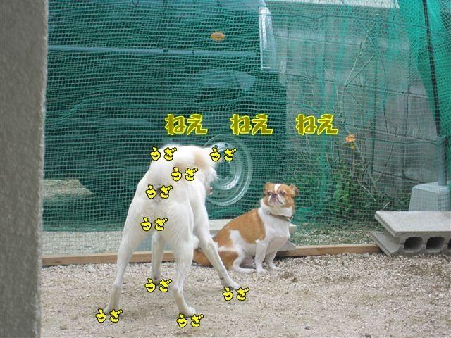 f:id:yasukazu01:20120909113635j:image
