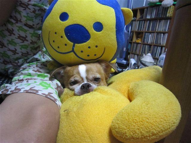 f:id:yasukazu01:20120912194312j:image