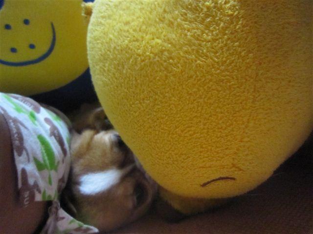 f:id:yasukazu01:20120912194513j:image
