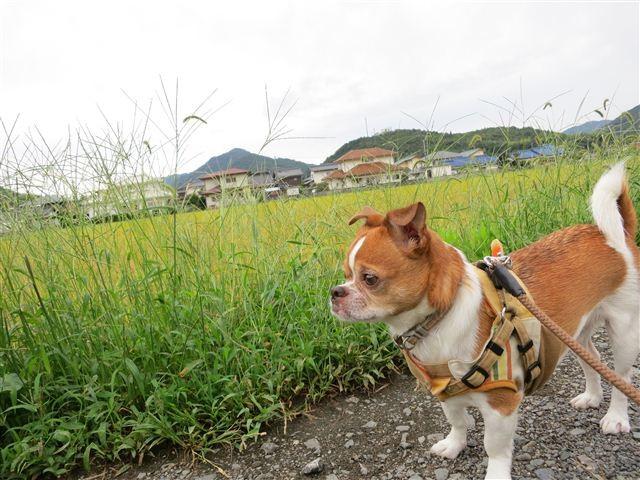 f:id:yasukazu01:20120916091930j:image