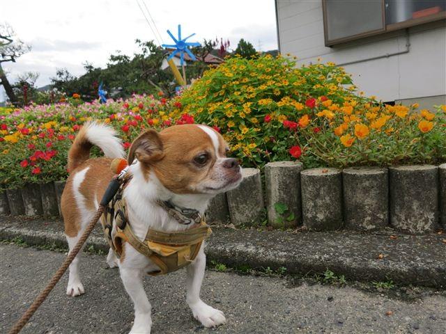 f:id:yasukazu01:20120916092640j:image