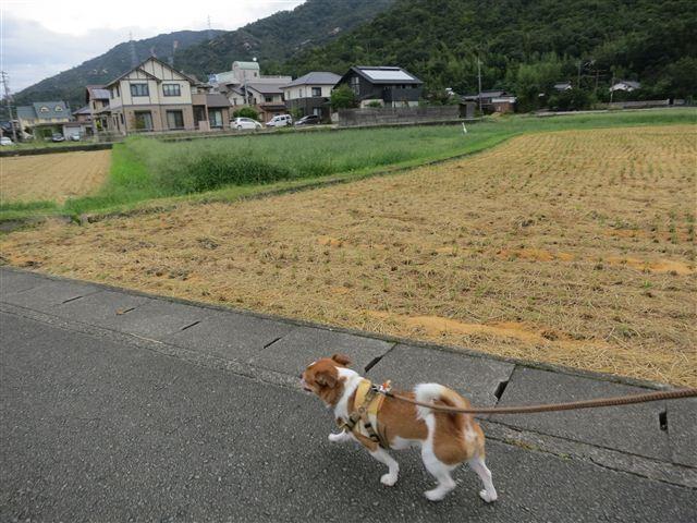 f:id:yasukazu01:20120916093103j:image