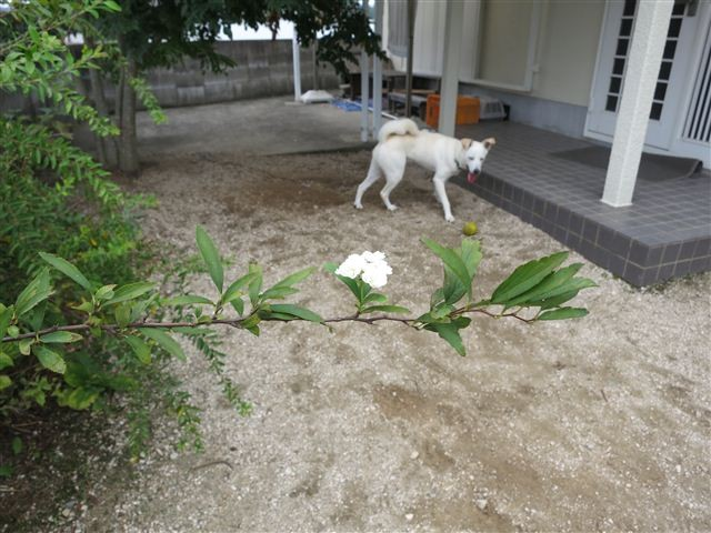 f:id:yasukazu01:20120916103058j:image
