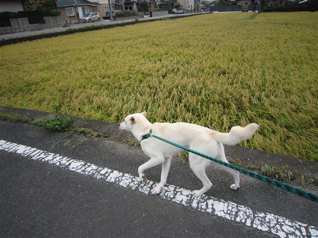 f:id:yasukazu01:20120917115110j:image