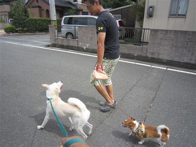 f:id:yasukazu01:20120917120454j:image