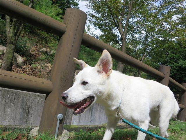 f:id:yasukazu01:20120918105550j:image