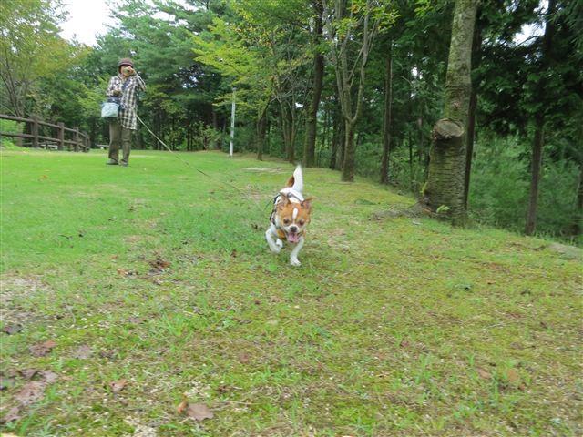 f:id:yasukazu01:20120918105645j:image