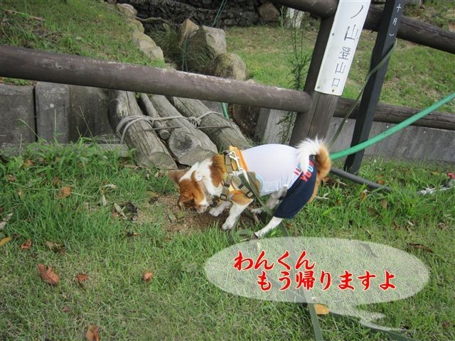 f:id:yasukazu01:20120918110606j:image