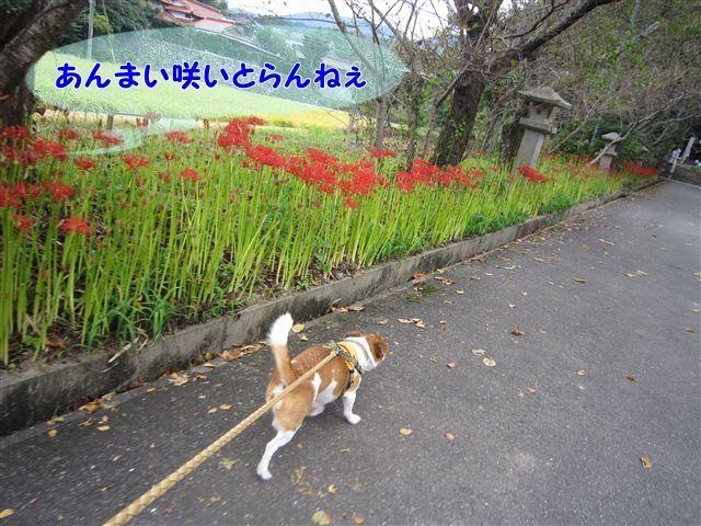 f:id:yasukazu01:20120922133742j:image