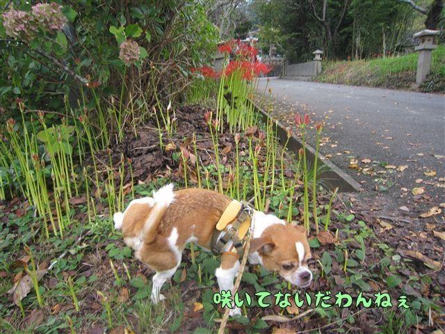 f:id:yasukazu01:20120922133803j:image
