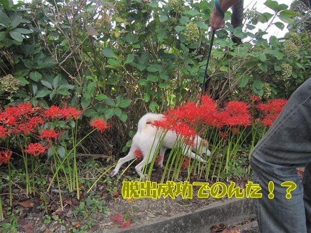f:id:yasukazu01:20120922133921j:image