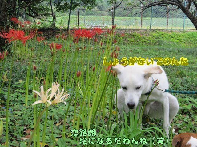 f:id:yasukazu01:20120922134019j:image