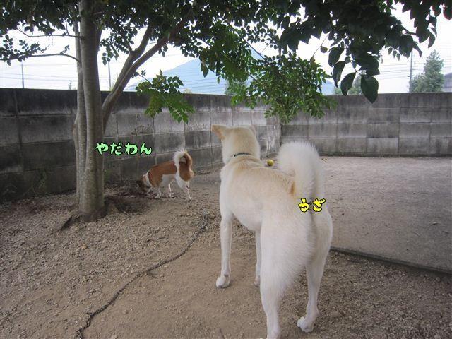 f:id:yasukazu01:20120922165653j:image