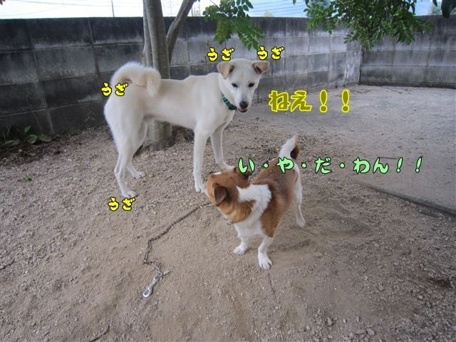 f:id:yasukazu01:20120922165720j:image