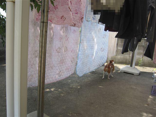 f:id:yasukazu01:20120923105658j:image