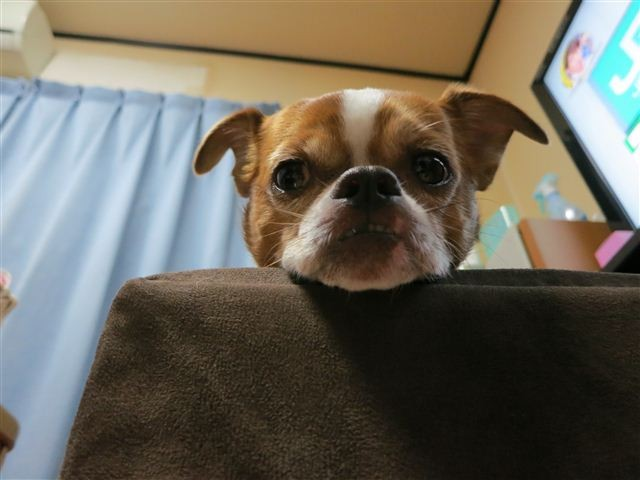 f:id:yasukazu01:20120924221750j:image