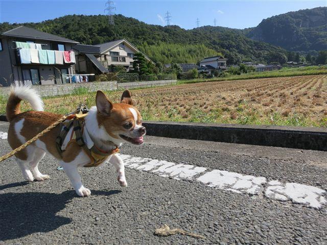 f:id:yasukazu01:20120925092034j:image