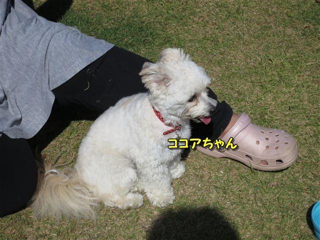 f:id:yasukazu01:20121003104814j:image
